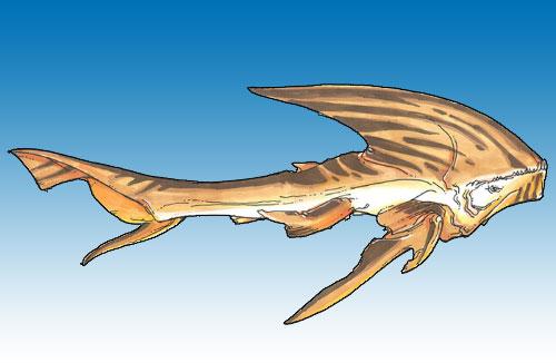 Requin Firaxan